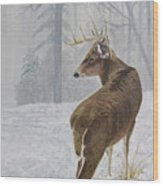 Winter Coat Buck Wood Print
