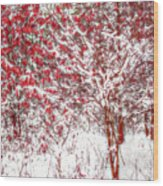 Winter Color  Wood Print