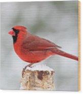 Winter Day Cardinal Wood Print