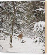 Winter Doe In The Upper Peninsula Wood Print