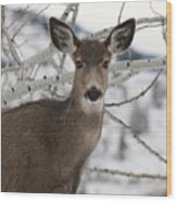 Winter Doe Of The Okanagan Wood Print