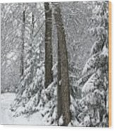 Winter Drive Wood Print
