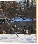 Winter Ducks Wood Print