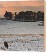Winter Dusk At Bradgate Park Wood Print