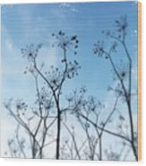Winter Fennel Two Wood Print