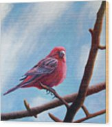 Winter Finch Wood Print