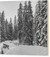 Winter Forest Journey Wood Print