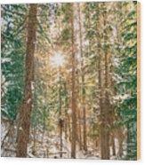 Winter Forest Sunshine Wood Print