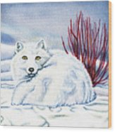 Winter Fox Wood Print
