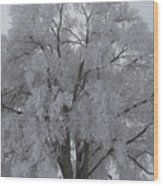 Winter Frost Wood Print