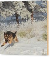 Winter Fun ... Montana Art Photo Wood Print