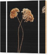 Winter Garden Triptych Wood Print