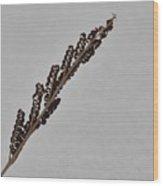 Winter Grain Wood Print