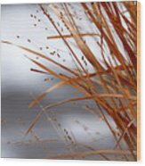 Winter Grass - 2 Wood Print