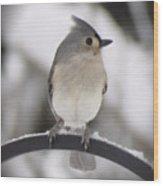 Winter Gray - Bird Wood Print
