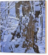Winter Guest Wood Print