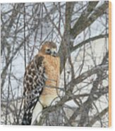 Winter Hawk Wood Print