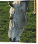 Winter Horse 4 Wood Print