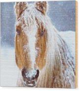 Winter Horse Portrait Wood Print