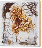 Winter Hydrangea Wood Print