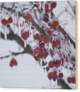 Winter Ice Berries Wood Print