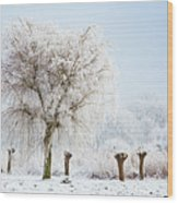 Winter In Holland Wood Print