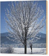 Winter In Innsbruck Wood Print