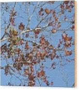 Winter In San Antonio Wood Print
