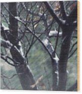 Winter In Texas Wood Print