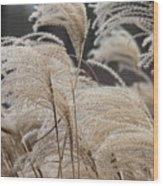 Winter In The Garden #1 Wood Print