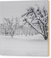 Winter In The Orchard Wood Print