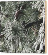 Winter Land  Wood Print
