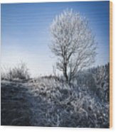 Winter Landscape Of Trees Covered With Frost Wood Print
