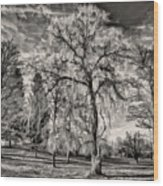 Winter Marches On Polaroid Wood Print