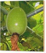 Winter Melon In Garden 2 Wood Print