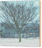 Winter Mimosa Painterly Wood Print
