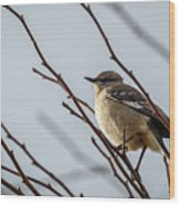 Winter Mockingbird Wood Print