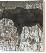 Winter Moose Wood Print