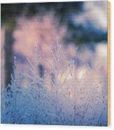 Winter Morning Light Wood Print