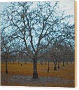 Winter Orchard Wood Print by Derek Selander