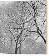 Winter Panorama  Wood Print