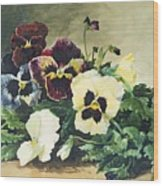 Winter Pansies Wood Print