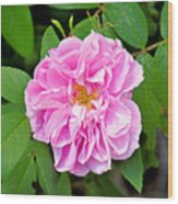 Winter Park Rose Wood Print
