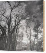 Winter Pathways Wood Print