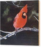 Winter Perch Wood Print