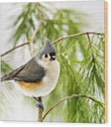Winter Pine Bird Wood Print