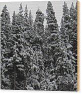 Winter Pine Spires Wood Print