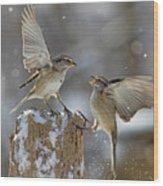 Winter Quarrel Wood Print