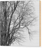 Winter Red And White  Wood Print