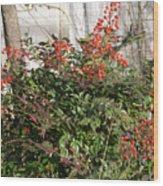 Winter Red Berries Wood Print